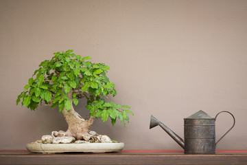 Aluminium Prints Bonsai vintage style watering can and Bonsai tree on wood shelf with brown wall background