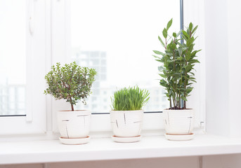 cultivation of plants on the windowsill