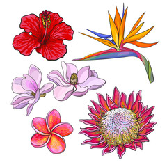 Tropical flowers - hibiscus, protea, plumeria, bird of paradise and magnolia, sketch style vector illustration isolated on white background. Colorful realistic hand drawing of exotic, tropical flowers