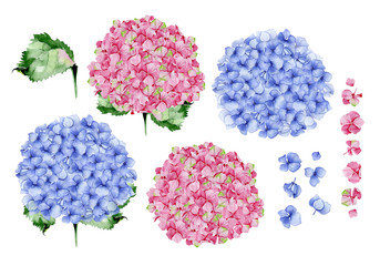 Blue and pink watercolor hydrangea floral design. Used for wedding or greeting card template, fabric print composition, st.Valentine's day card or Mothers day card decoration. Botanical illustration.