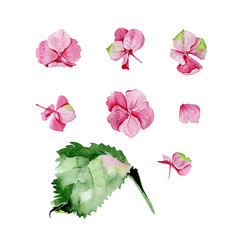 Pink watercolor hydrangea floral design set. Used for wedding or greeting card template, fabric print composition, st.Valentine's day card or Mothers day card decoration. Botanical illustration.