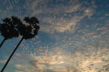 Sugar palm on sky and cloud background. Evening sky with lots small clouds - natural background. Fototapete