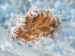 Gefrorenes Blatt im Winter