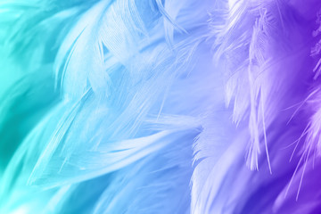 Wall Mural - Color trends chicken feather texture background