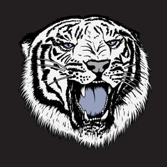 Head of white tiger
