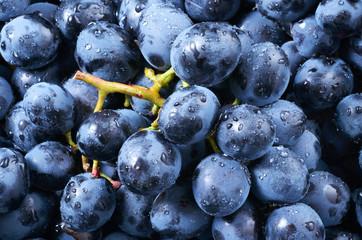 Fototapete - Grape background. Dark grape. Blue grape. Wine grape. With drops