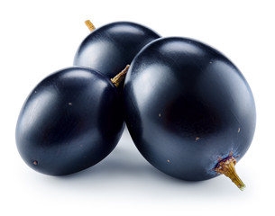 Fototapete - Dark blue grape. Three berries isolated on white background. Wit