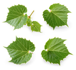 Fototapete - Grape leaves isolated on white. Collection. Full depth of field.