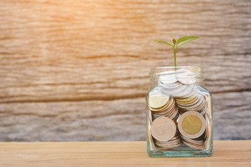 Money in a glass jar with green plant. concept siphons money,vintage tone and sunlight