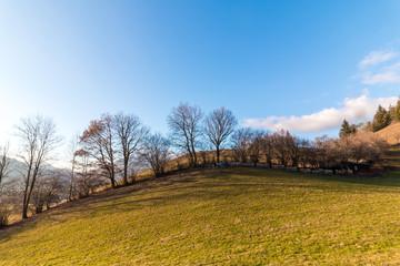 Hügel mit Baumzeile, bunt