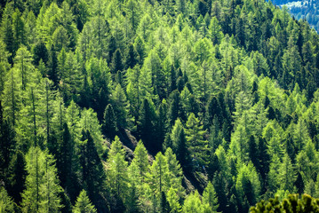 Papiers peints Forets Spruce forest, aerial view