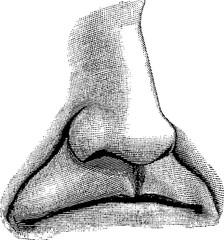 Vintage image nose, lips
