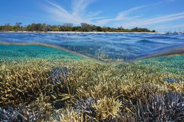 Above and below water, healthy coral reef underwater and island split by waterline, south Pacific ocean, Signal island, lagoon of Grande Terre, New Caledonia