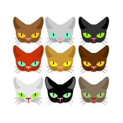 Cat face set. Head cats different color. Muzzle pet collection