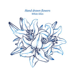 Hand drawn vector lilies