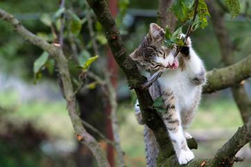 cat climbing to the tree