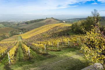 Keuken foto achterwand Wijngaard Countryside landscape with vineyards during fall season in rural Italy