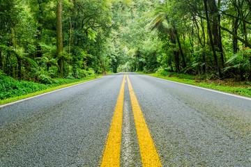 Forest road near Rotorua, New Zealand