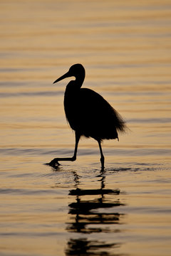 shadow of an egret in the sunset, Sine Saloum delta , Delta