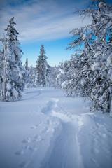 Winter Finnish snowy lanscape