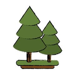 canadian evergreen tree pine sketch vector illustration eps 10