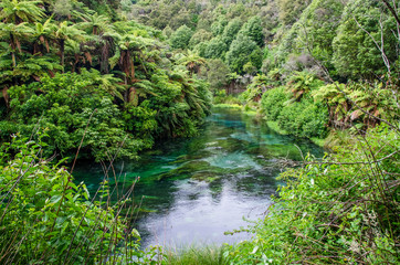Blue Spring which is located at Te Waihou Walkway,Hamilton New Zealand. It internationally acclaimed supplies around 70% of New Zealand's bottled water because of the pure water.