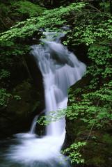 新緑の渓流