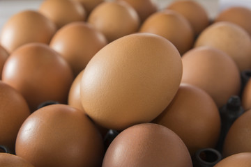 Fresh brown chicken egg in the market