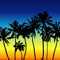 Sunset scene with palm trees