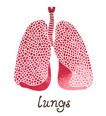 Lungs watercolor illustration, human anatomy vector isolated on white background with handwritten text