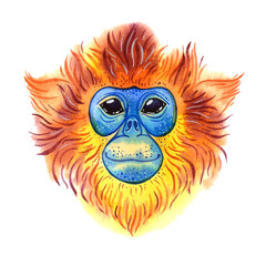 Watercolor golden snub-nosed monkey on white background