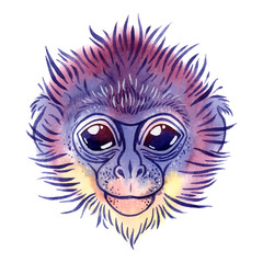 Vector watercolor spectacled langur on white background