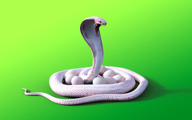 3D rendering Albino king cobra snake and eggs isolated on green background, 3D illustration King cobra snake cares or protects eggs.