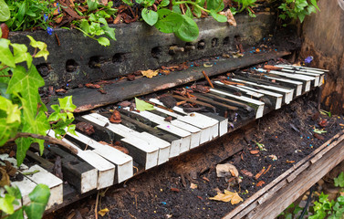 Old piano left to become overgrown with plants and vegetation