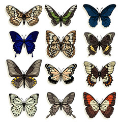 Set of illustrations with butterflies. Freehand drawing