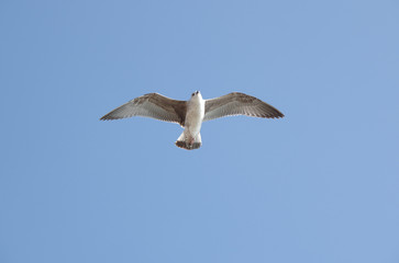 View on seagull