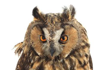 Foto auf Leinwand Eule portrait owl