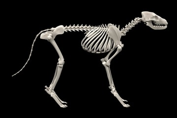 realistic 3d render of dog skeleton