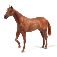 realistic 3d render of quarter horse