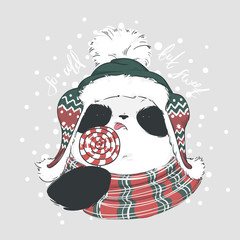 Panda in scarf, hat and red-white round candy on a stick with bubo with lettering so cold, but sweet. Vector illustration for greeting card, poster, or print on clothes. Christmas and New Year.