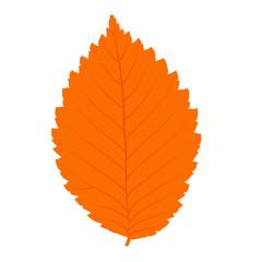 Autumn vector realistic leaf