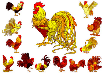 Set yellow red roosters on white
