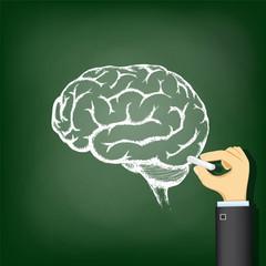 Hand drawing a chalk human brain.