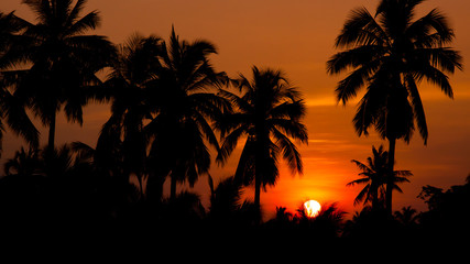 Coconut palms and the sun in the morning.