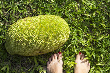 Jackfruit on green grass with woman feet