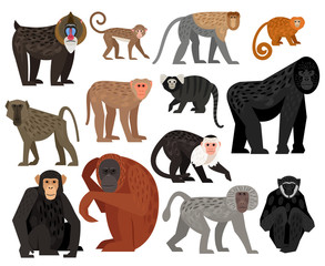 Big collection of different cute Monkeys