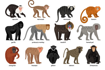 Big set of different Monkeys Wall mural