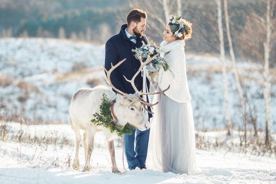 Beautiful bride and groom walk with the deer. Wedding ceremony in winter.