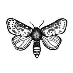 Butterfly. Insect night moth. Lepidoptera. Hand drawn.