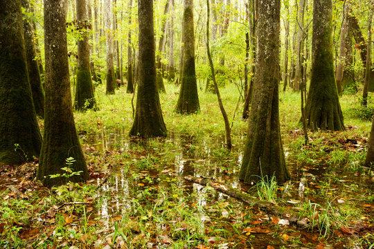 Congaree Swamp